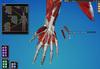 Cyber-Anatomy Med VR - Mão