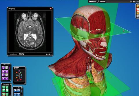 Cyber-Anatomy Med VR - Cabeça